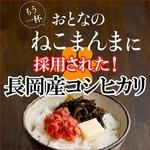 平成21年産新米!中村さんちの新潟県長岡産コシヒカリ白米