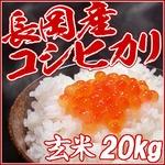 平成25年産 中村農園の新潟県長岡産コシヒカリ玄米20kg(5kg×4袋)