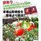 【訳あり】ふぞろいの山形県産さくらんぼ 佐藤錦 350g×2P 写真2
