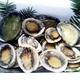 【訳あり】国産養殖アワビ1キロ(38〜48個) 写真6