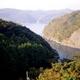 【訳あり】国産養殖アワビ500g(20〜30個) 写真6