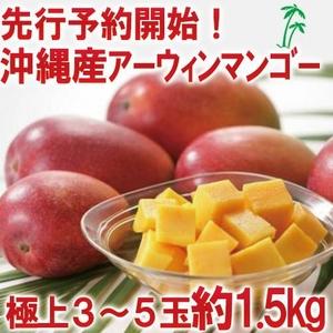 【 早期予約限定価格 訳あり】★沖縄産 糖度13度以上★美味しい訳ありマンゴー1.5キロ(3玉〜5玉)