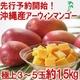 【完全予約販売 早期予約限定価格 訳あり】★沖縄産 糖度13度以上★美味しい訳ありマンゴー1.5キロ(3玉〜5玉) 写真1