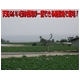 特別栽培農家直送「新じゃがいも」M〜2Lサイズ 10kg 写真3