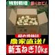 特別栽培農家直送「新玉ねぎ」10kg - 縮小画像1