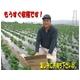 特別栽培農家直送「新玉ねぎ」10kg 写真5