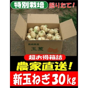 特別栽培農家直送「新玉ねぎ」30kg(10kg箱×3) - 拡大画像