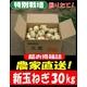 特別栽培農家直送「新玉ねぎ」30kg(10kg箱×3) - 縮小画像1
