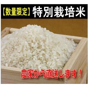 """【数量限定】特別栽培農家から""""ひのひかり""""新米直送10kg - 拡大画像"""