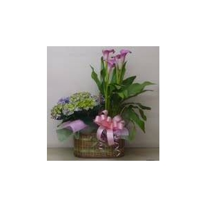 母の日用 花かご『D』