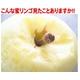 【お歳暮用 のし付き(名入れ不可)】福島県産りんご プレミアム蜜サンふじ 10kg(32〜36玉) 【贈答用大玉】  - 縮小画像6