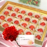【母の日限定】 さくらんぼ佐藤錦24粒&カーネーション生花のセット!メッセージカード付き♪