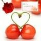 【母の日限定】メッセージカード付き さくらんぼ佐藤錦24粒と生花カーネーションのセット 写真2