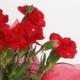 【母の日ギフト!5月5日まで!】カーネーション 赤系 ラッピング 5号鉢 写真2