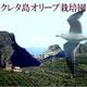 クレタ産エキストラバージンオーガニックオリーブオイル 2本セット 写真3