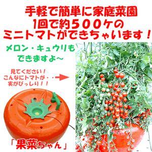 手軽に家庭菜園 家庭用水気栽培(ホームハイポニカ) 果菜 (かな)ちゃん ミニトマト種付き - 拡大画像