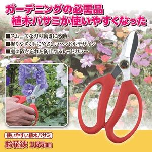 使いやすい 植木鋏/花ばさみ 【165mm】 ...の紹介画像2