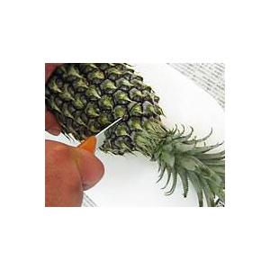 【産地直送お取り寄せ・季節限定沖縄産フルーツ】スナックパイン