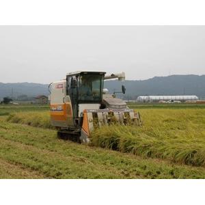 【平成22年産新米!澤田農場のオリジナルブレンド米(三和音)白米】画像3