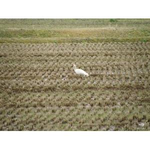 【平成22年産新米!澤田農場のオリジナルブレンド米(三和音)白米】画像4
