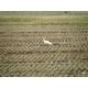 【お試しに!】 澤田農場のオリジナルブレンド米(三和音)玄米 5kg - 縮小画像4