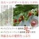 斉藤いちご農園のいちごジェラート&シャーベット  10個入 写真2