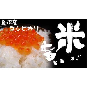 【平成27年産】中村農園の魚沼産コシヒカリ白米20kg(5kg×4袋)