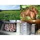 種子島産安納芋 5kg ≪送料無料≫ 写真2