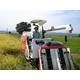 【平成22年産】やまもと健康農園の長岡産コシヒカリ玄米 20kg(5kg×4袋) - 縮小画像2
