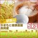 【訳あり】やまもと健康農園の新潟県長岡産コシヒカリ白米5kg
