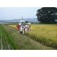 【訳あり】やまもと健康農園の新潟県長岡産コシヒカリ白米30kg(5kg×6袋) - 縮小画像5