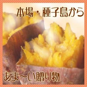 【種子島産】安納いも(蜜芋)5kg(25個前後)