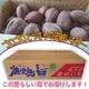 【種子島産】安納芋(あんのういも) 5kg(25個前後) - 縮小画像3