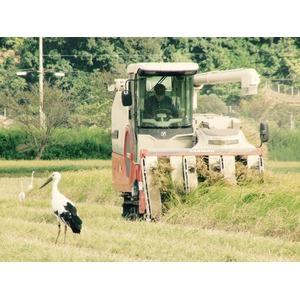 【平成29年産】コウノトリ舞い降りるコシヒカリ 六方銀米 20Kg(5kg玄米×4)