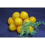 鹿児島産 サウスオレンジ 10個入り(約2.5Kg)
