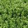 海東ブラザース ジャスミン茶 有機JAS認定商品 無添加・無着色・無香料 【500ml×24本】