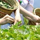 海東ブラザース 緑茶 有機JAS認定商品 無添加・無着色・無香料 【500ml×48本】 写真4