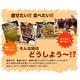 黒姫茶【5個】 - 縮小画像2
