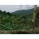 インドネシア スマトラマンデリン 【豆】 500g - 縮小画像2