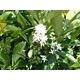 インドネシア スマトラマンデリン【粉 中挽き】 500g - 縮小画像3