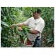 ハワイコナ・ハワイコナクイーン農園 エキストラファンシー【粉 中挽き】 500g - 縮小画像3