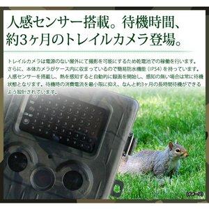 【防犯カメラ】【microSDカード16GBセット】【ブラックタイプ】人感センサー搭載 待機稼働3ヶ月 小型カメラ/防犯カメラ 不可視赤外線 トレイルカメラ(ビデオカメラ) 【TRAIL GUARD typeN - トレイルガード ノーマルタイプ -】(MS-200HTM)