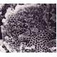 「宇宙のくつ下」シリーズ ミネラルインソール 水玉ブラック(リバーシブルタイプ) 24cm【5枚セット】 (靴の中敷き) - 縮小画像6