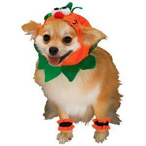 【コスプレ】 RUBIE'S(ルービーズ) PET(ペット用コスプレ) ペットコスプレ Headpiece & 4 Paw Cuffs Pumpkin(ヘッドピース & 4 パーティー カフス パンプキン) Mサイズ - 拡大画像