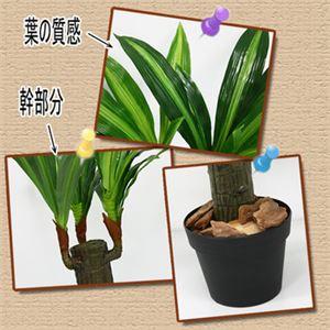 人工観葉植物 ドラセナフレグランス 53cm