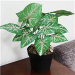人工観葉植物 クワズイモ 紅斑 45cm