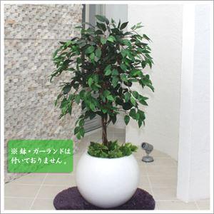 人工観葉植物 ベンジャミン グリーンナターシャ 110cm - 拡大画像