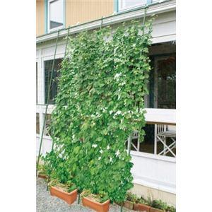 緑のカーテン 伸縮立掛けタイプ 幅180cm - 拡大画像