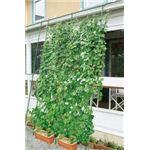 緑のカーテン 伸縮立掛けタイプ 幅180cm