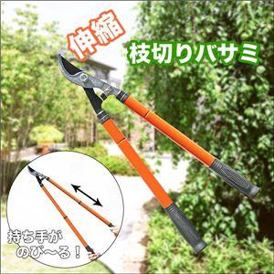 高い枝も楽々カット!ガーデニングの必需品 庭のお手入れに便利な伸縮枝切りバサミ 1点 - 拡大画像